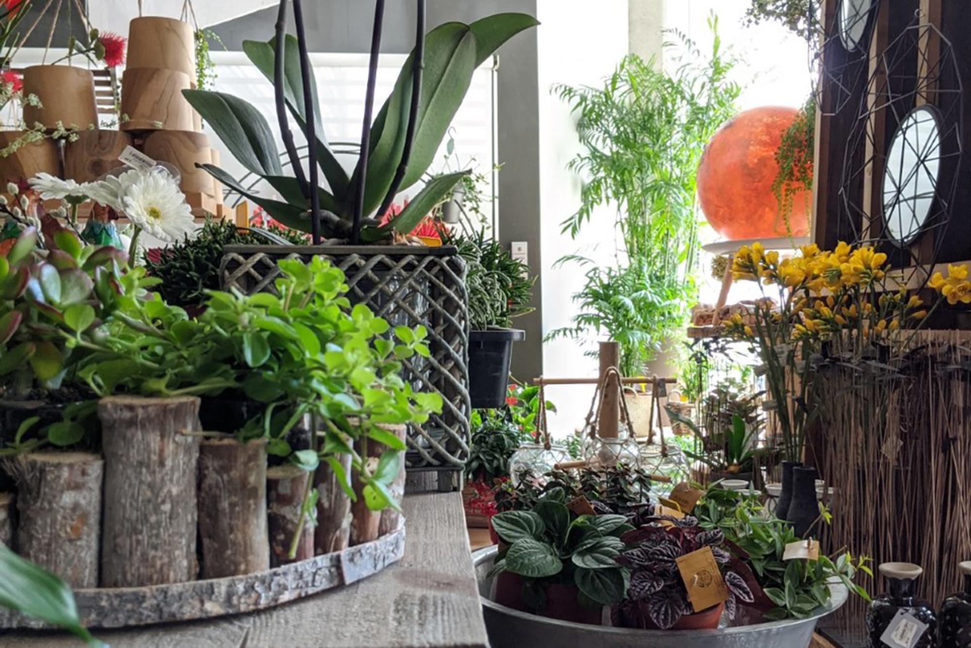 <strong>Decoració, benestar i més</strong>  <br>10 motius per tenir plantes a casa