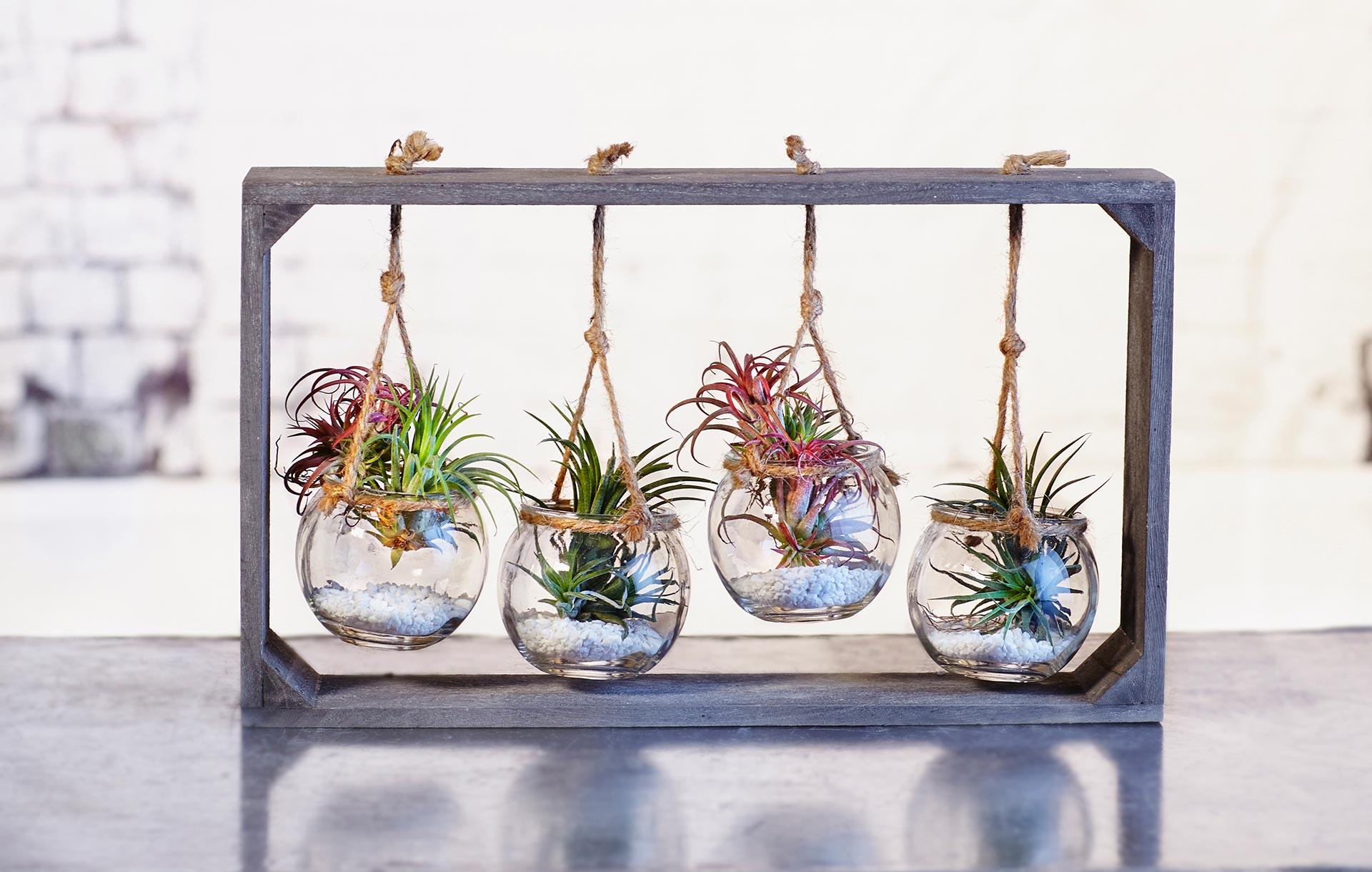 <strong>Plantes per a tothom</strong><br>Les plantes més agraïdes per a principiants