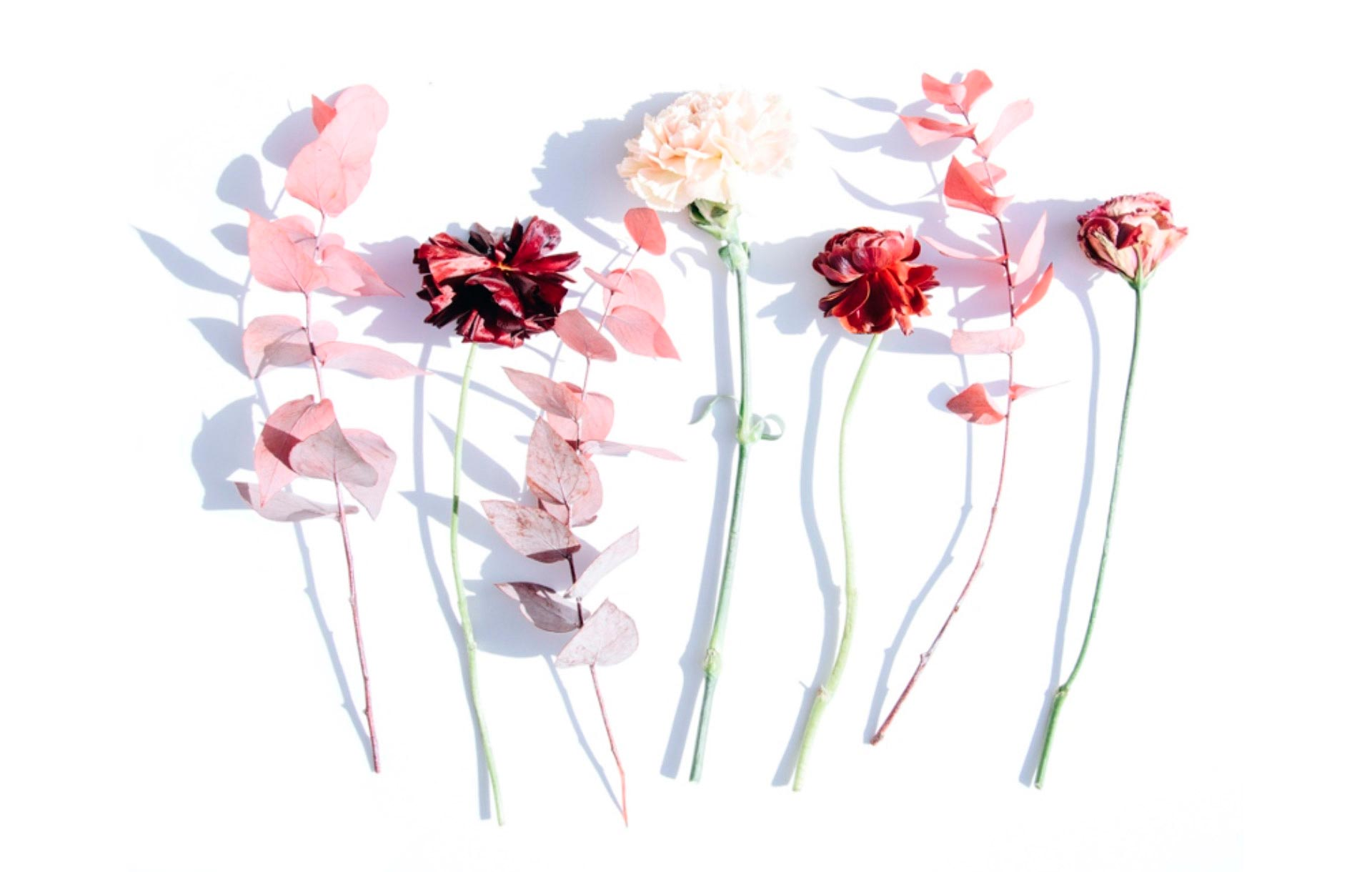 <strong>Assecar flors i fulles</strong><br>Tot el que necessites saber per donar un segon ús a les plantes