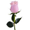 rosat-es
