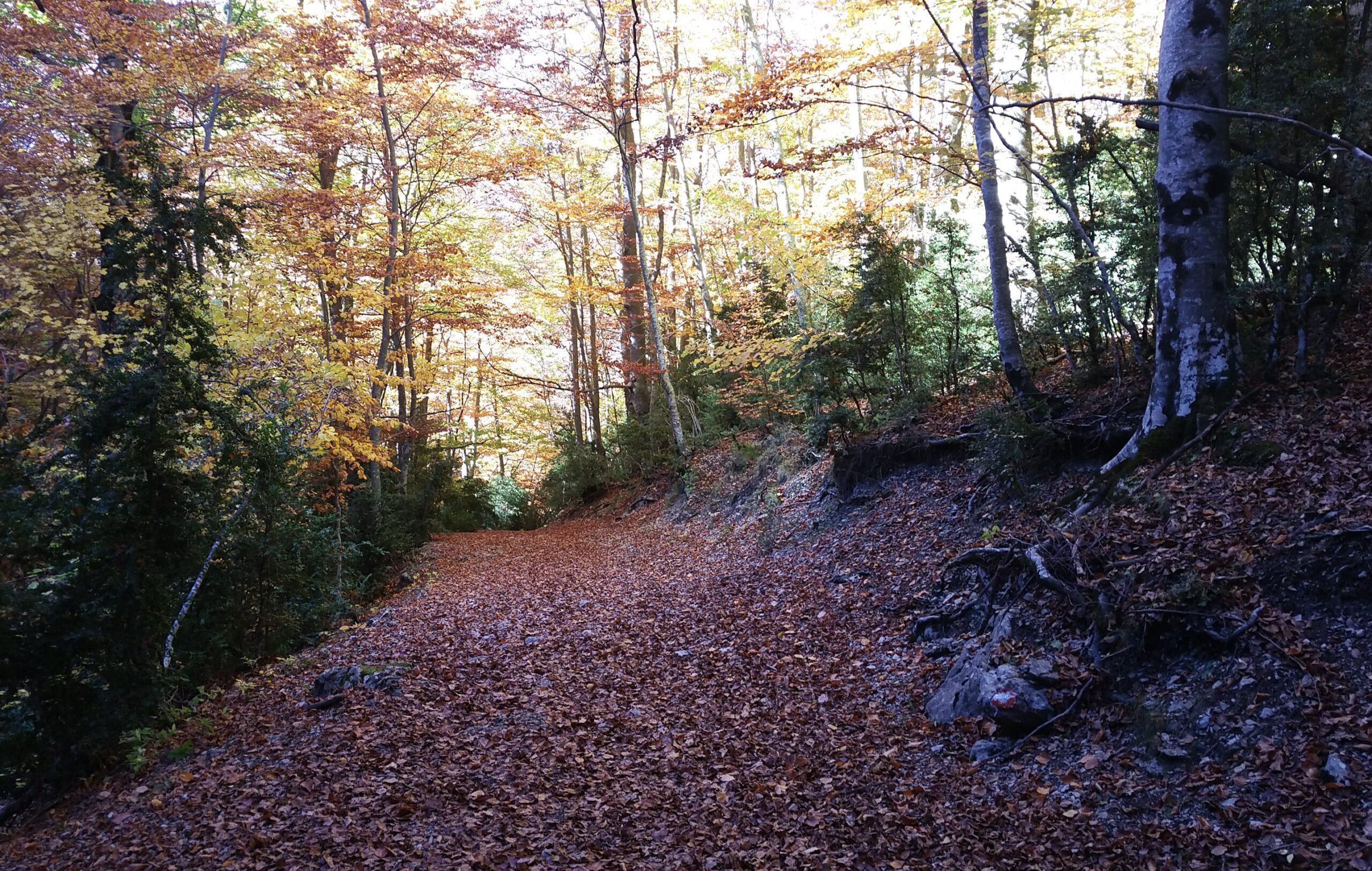 <strong> El otoño con los cinco sentidos </strong>