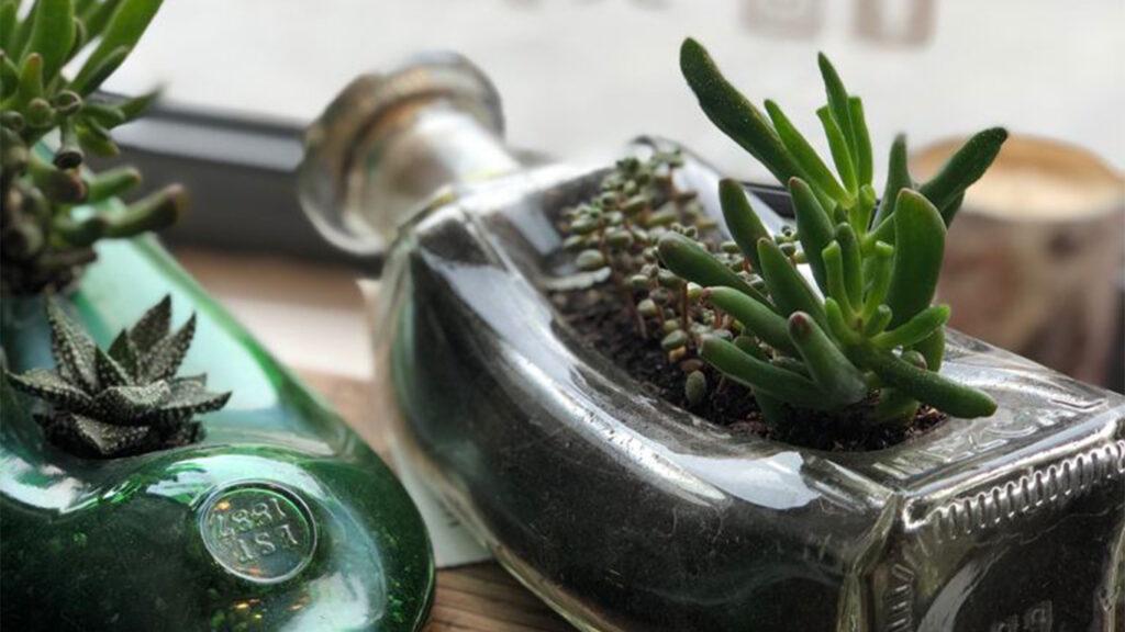 Planta crasa en botella de vidrio