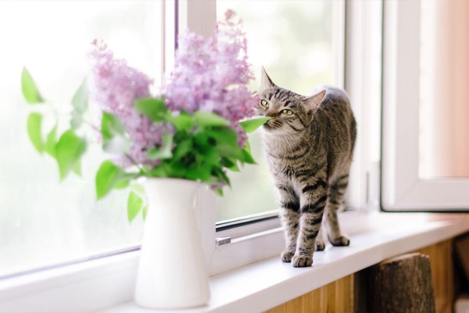 <strong>Quines són les millors plantes 'pet friendly'?</strong><br>